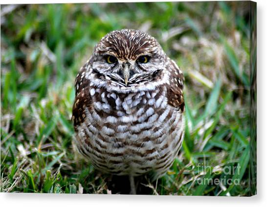 Owl. Best Photo Canvas Print