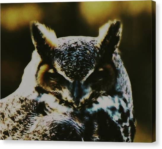 Owl Portrait Canvas Print