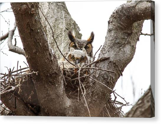 Owlet And Mom Canvas Print