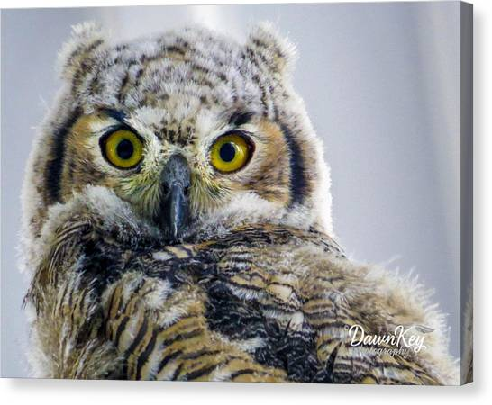 Owlet Close-up Canvas Print
