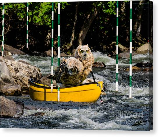 Owlets In A Canoe Canvas Print