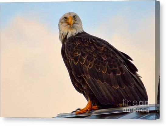 Owlish I Canvas Print