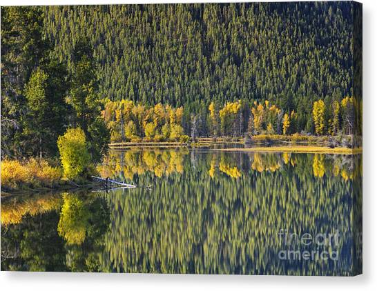 Teton National Forest Canvas Print - Oxbow Abstract by Mark Kiver