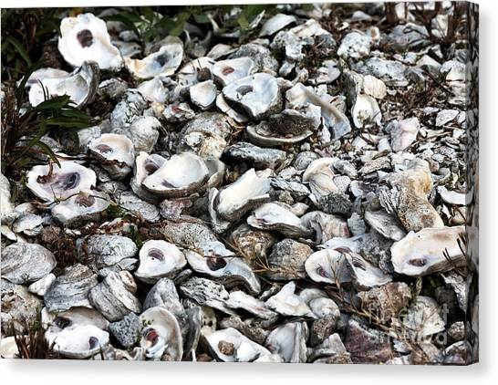 Oyster Shells Canvas Print by John Rizzuto