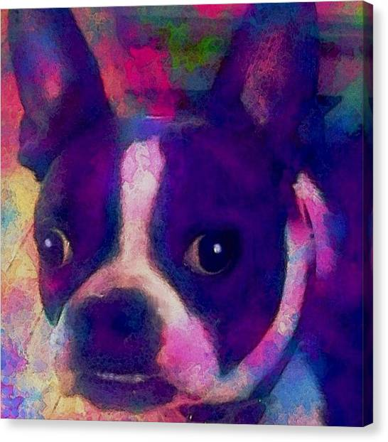 Robins Canvas Print - Ozzy ... #bostonterrier by Robin Mead