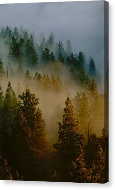 Canvas Print featuring the photograph Pacific Northwest Morning Mist by Ben Upham III