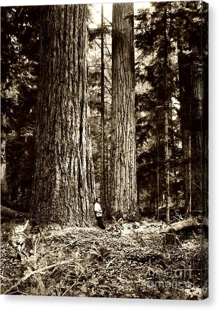 Canvas Print featuring the photograph Pacific Old Growth Forest by Joe Jeffers