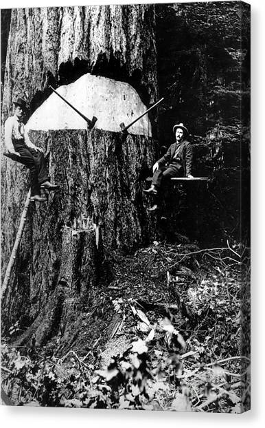 Canvas Print featuring the photograph Pacific Old Growth Tree And Fallers by Unknown