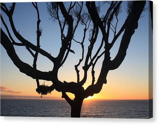 Pacific Tree Sunset Canvas Print