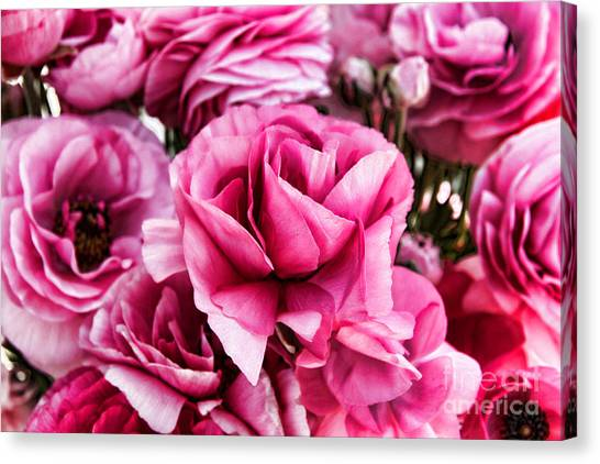 Paint Me Pink Ranunculus Flowers By Diana Sainz Canvas Print