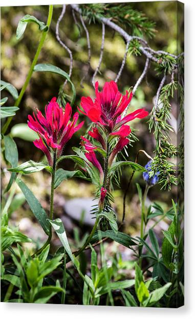 Paintbrush Canvas Print