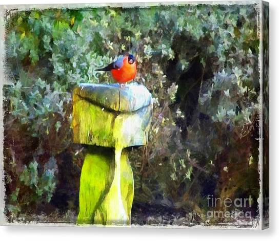 Painted Bullfinch S2 Canvas Print