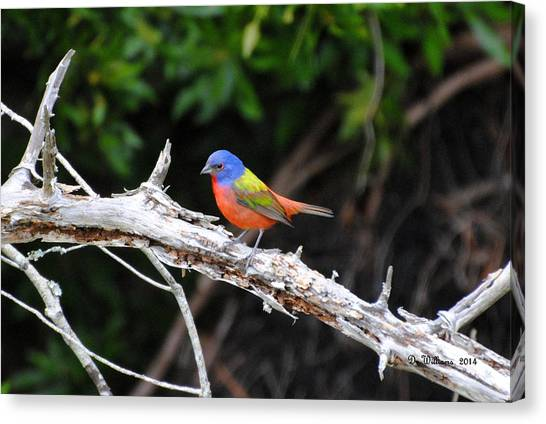 Painted Bunting Perched On Limb Canvas Print