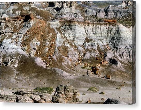 Petrified Forest Canvas Print - Painted Desert by Jim West