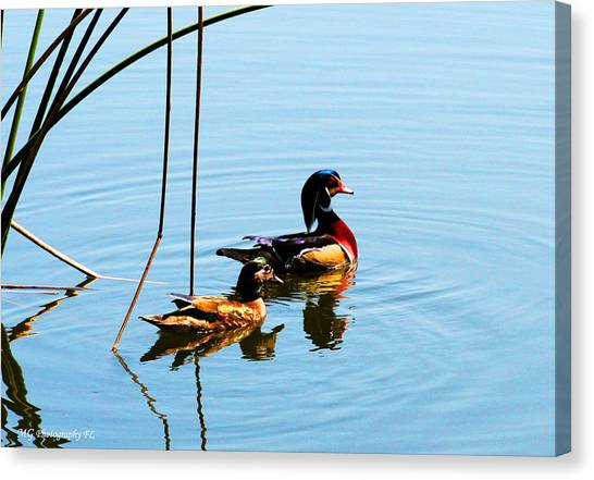 Painted Ducks Canvas Print