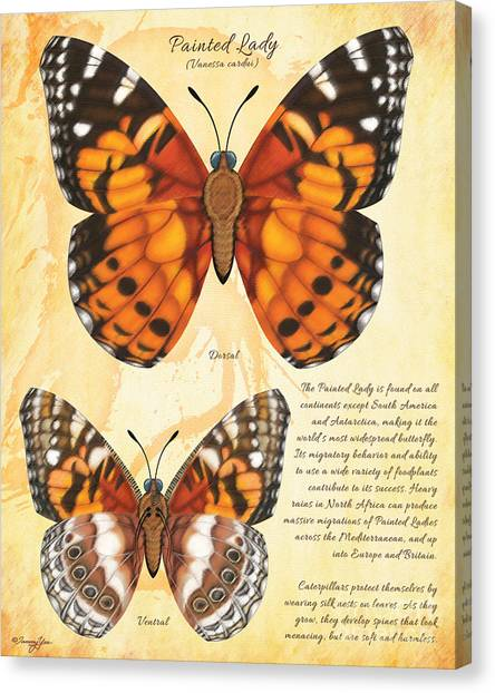 Painted Lady Butterfly Canvas Print by Tammy Yee