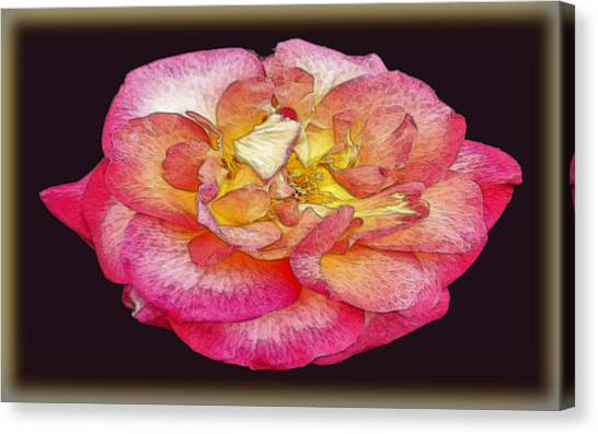 Painted Rose Canvas Print by Dennis Dugan