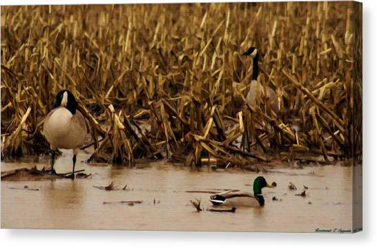 Pair Of Canada Geese And Teal Duck Canvas Print by Rosemarie E Seppala