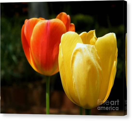 Georgia State University Canvas Print - Pair Of Red And Yellow Tulips by Cheryl Hardt Art