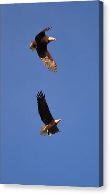 Pairs In Flight And Life Canvas Print