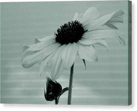 Pale Beauty Canvas Print