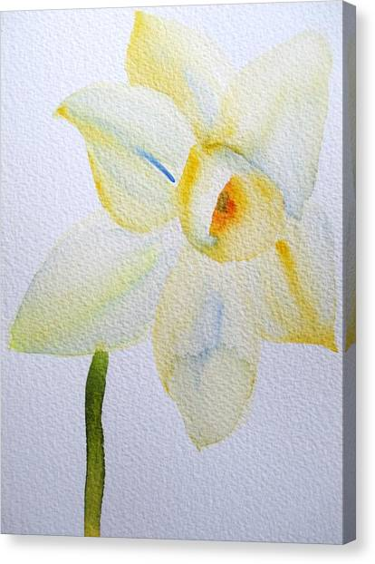 Pale Yellow Daffodil Canvas Print by Sacha Grossel