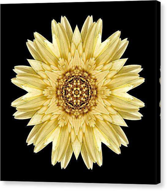 Pale Yellow Gerbera Daisy I Flower Mandala Canvas Print
