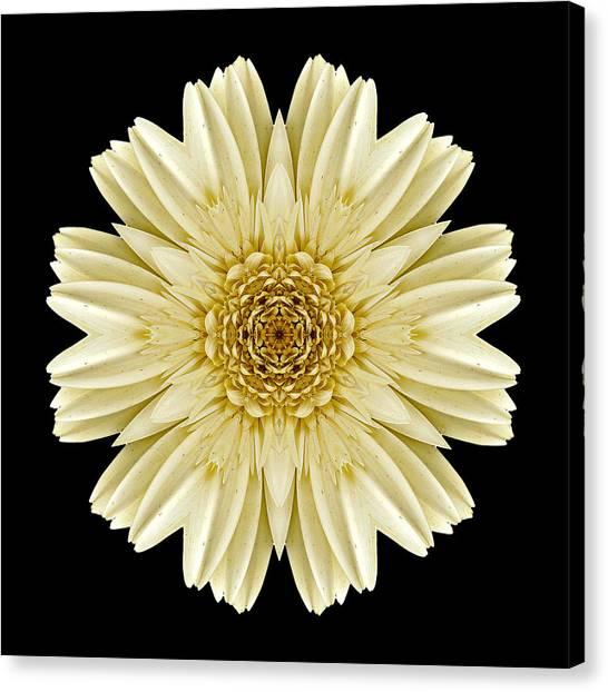 Pale Yellow Gerbera Daisy IIi Flower Mandala Canvas Print