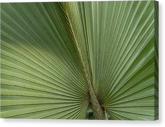 Belize Canvas Print - Palm, Belize Botanic Garden by William Sutton