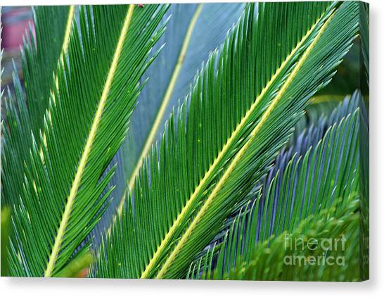 Palm Cycas Fronds Canvas Print