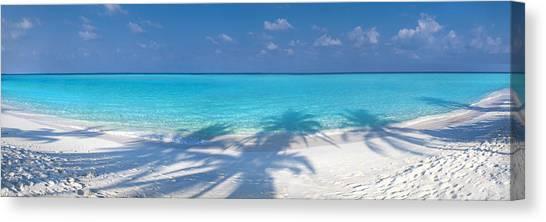 White Sand Canvas Print - Palm Escape by Sean Davey
