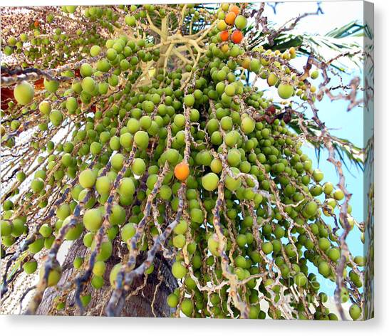 Palm Grapes Canvas Print