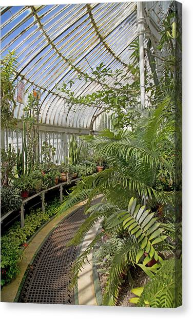 Belfast Canvas Print - Palm House Belfast Ireland by Betsy Knapp