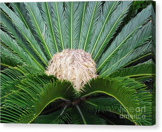 Palm Plant Canvas Print