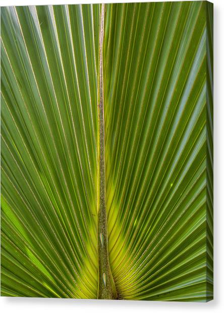 Palm Reader Canvas Print