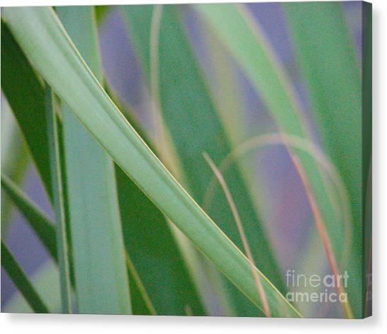 Palm Reeds Canvas Print
