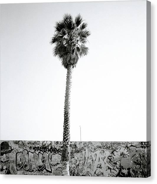 Palm Tree And Graffiti Canvas Print