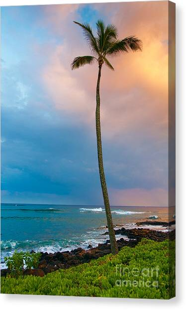 Palm Tree At Sunset. Canvas Print