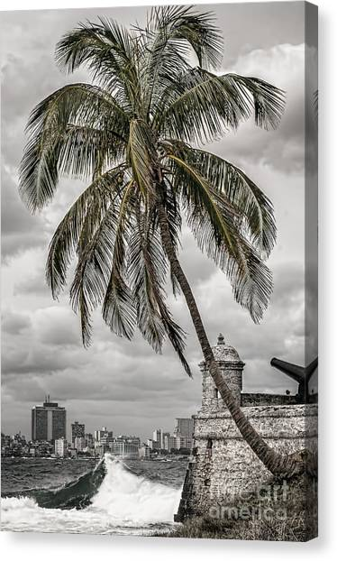 Palm Tree In Havana Bay Canvas Print