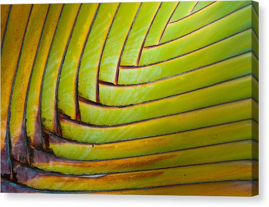 Palm Tree Leafs Canvas Print