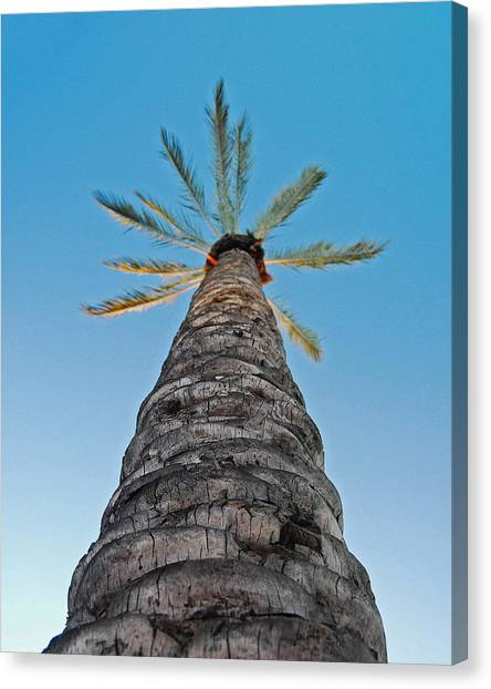 Palm Tree Looking Up Canvas Print