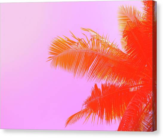 Palm Tree On Sky Background. Palm Leaf Canvas Print