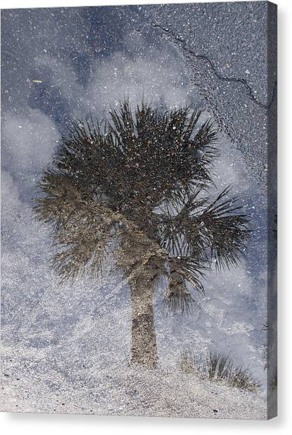 Palm Tree Reflection Canvas Print by Michel Mata