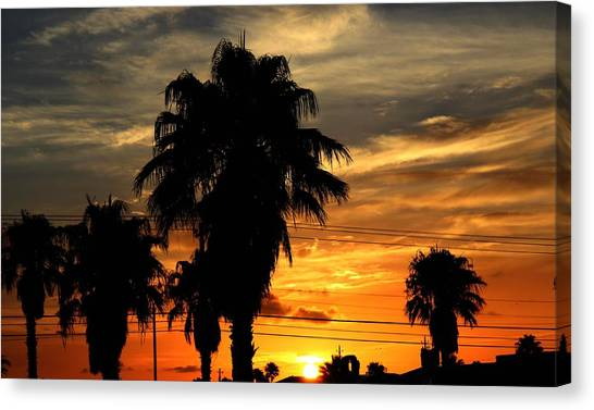Canvas Print featuring the photograph Palm Tree Silhouette by Candice Trimble