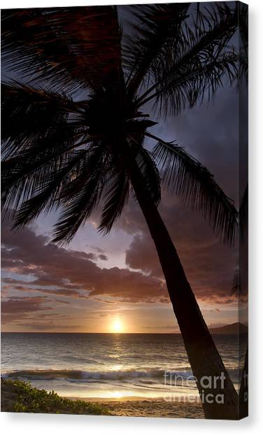 Palm Trees Sunsets Canvas Print - Palm Tree Sunset Maui Hawaii by Dustin K Ryan