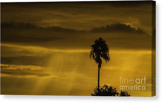 Palm Trees Sunsets Canvas Print - Palm Tree Sunset by Mitch Shindelbower