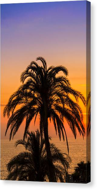 Palm Tree Sunset Vertical Canvas Print