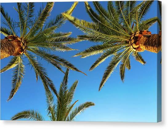 Palm Trees Against A Blue Sky Canvas Print by Wladimir Bulgar