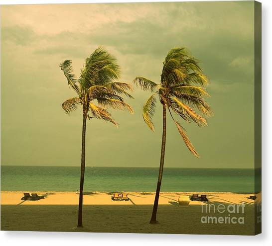 Palm Trees At Hallendale Beach Canvas Print
