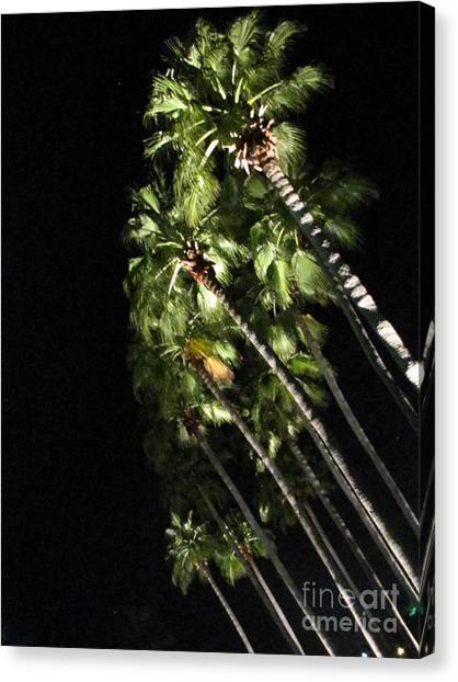 Palm Trees At Night Canvas Print by Gayle Melges